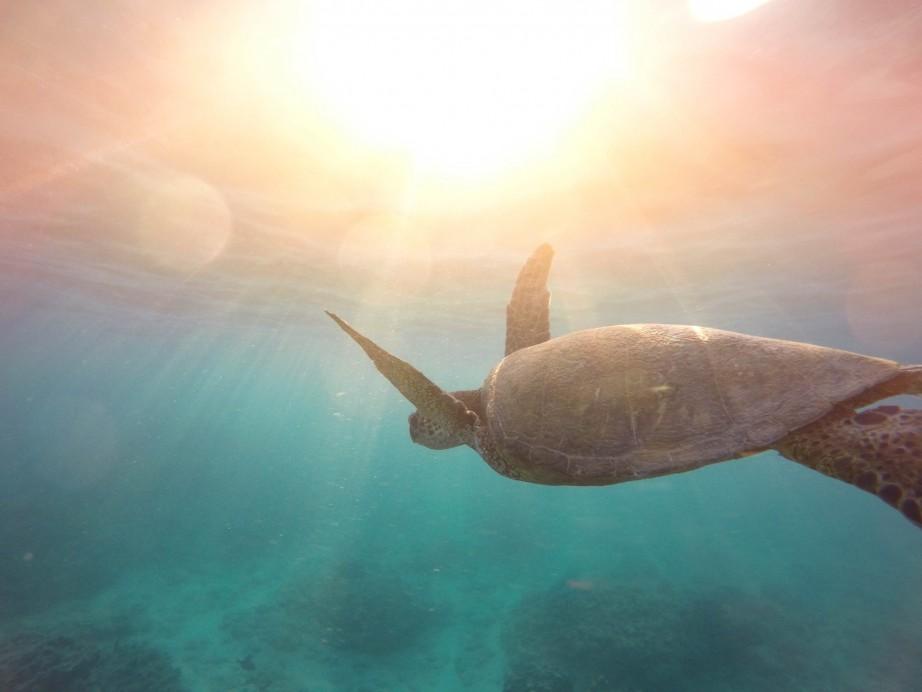 Protégez des tortues en Polynésie Française avec CocoGreen.fr